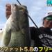 山下哲史プロが梅雨の琵琶湖におすすめのアラバマリグ&フリーリグを紹介!!
