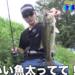 真夏の大江川水系で釣る方法!!