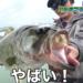 夏の琵琶湖の定番メソッド ハネネコ&ディープネコを紹介!!